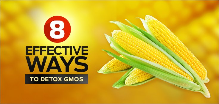 8-Effective-Ways-to-Detox-GMOs_aNu_26-11-2014_735x350