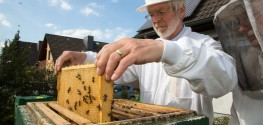 Why 100,000 German Bee Keepers Want to Ban GMOs