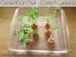 carrot greens