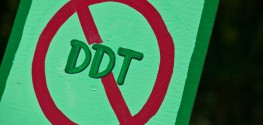 New Study: DDT Exposure Linked to 4-Fold Breast Cancer Increase