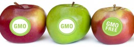 Survey Reveals Americans Don't Trust Scientists on GMOs