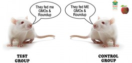Biotech Found to Use GM-Contaminated Rat Feed in Fraudulent Studies