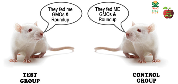GMO-rats-and-Roundup-735-350