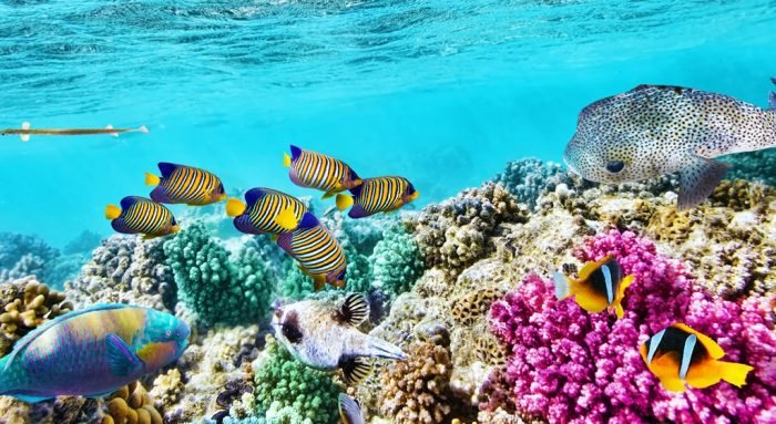 Source: National Geographic - A healthy section of the Great Barrier Reef