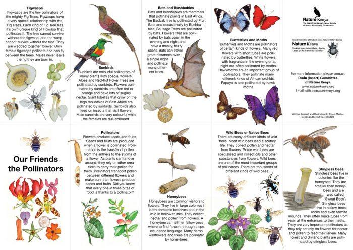 Pollination Worksheet Ks2 on Life Cycle Plant Kindergarten Worksheet