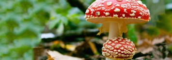 How to Know Which Mushrooms Are Safe to Eat and Which Are Toxic
