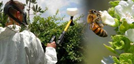VIDEO: Director of Pesticide Action Network Explains How Neonicotinoids Work