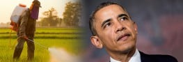Send a Message to Obama: Ban 'Likely-Carcinogenic' Glyphosate-Herbicides!