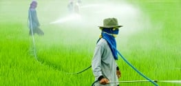 These 'Big 6' Chemical Companies Now Make 50,000 Different Pesticides