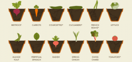The Simple Vegetable Gardening Cheat Sheet: All You Need to Know