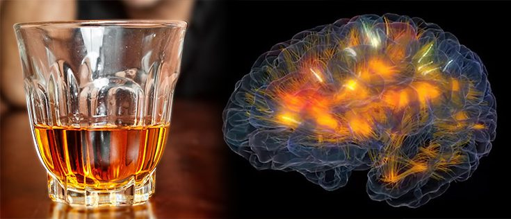 alcoholism and the brain