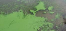 Health Officials in Cincinnati and Kentucky Extend Toxic Algae Bloom Advisory