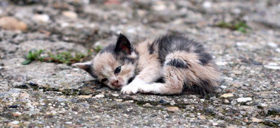 kitten in the road