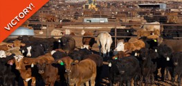 Big Win for Animal Lovers: Judge Strikes Down Ag Gag Law in Idaho