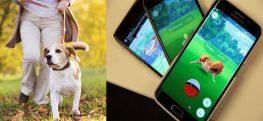 Animal Shelter Uses Pokemon Go Craze for Walking Dogs