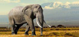 Elephant Lovers, Rejoice! China Vows to End the Ivory Trade in 2017