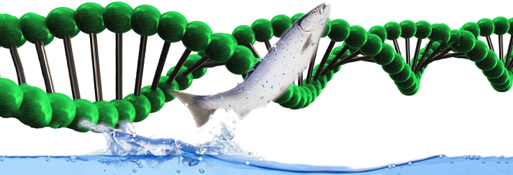 animal-fish-salmon-water-alpha-dna-735-250