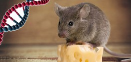 Deleting a Gene Stops Mice From Overeating - Are Humans Next?