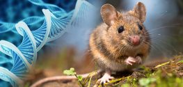 mouse dna