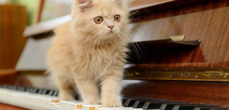 animal_cat_music_piano_735_354