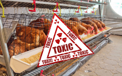toxic animal feed