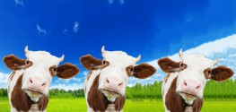 "Chinese Firm says ""No"" to Cloning Humans, but ""Yes"" to Cloning Beef Cattle"