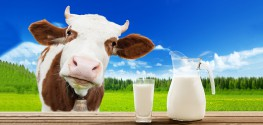 Research Highlights Key Benefits of Choosing Organic Meat, Milk
