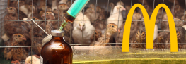 Investors Demand that McDonald's Ban the Use of Antibiotics in its Meat