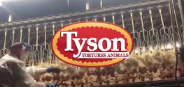 Celebrities Promote Petition to Tell Tyson: Stop Ripping Heads Off Chickens!