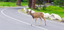FINALLY: If You Live in Oregon, You can Have Your Roadkill and Eat it, Too