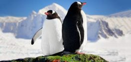 animals in antarctica