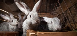 "Potentially Deadly ""Rabbit Fever"" on the Rise"