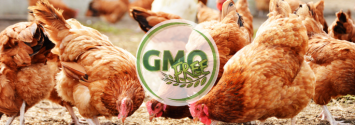 Another Victory: Poultry Industry Giant Goes GMO-Free
