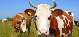Texas Man's Mad Cow Disease Likely from Contamination more than 10 Years Ago