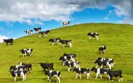 Groups Sue FDA Over Use of Antibiotics in Animal Feed