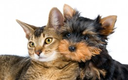 Pets Can Help You Heal | Here Are 3 Ways How