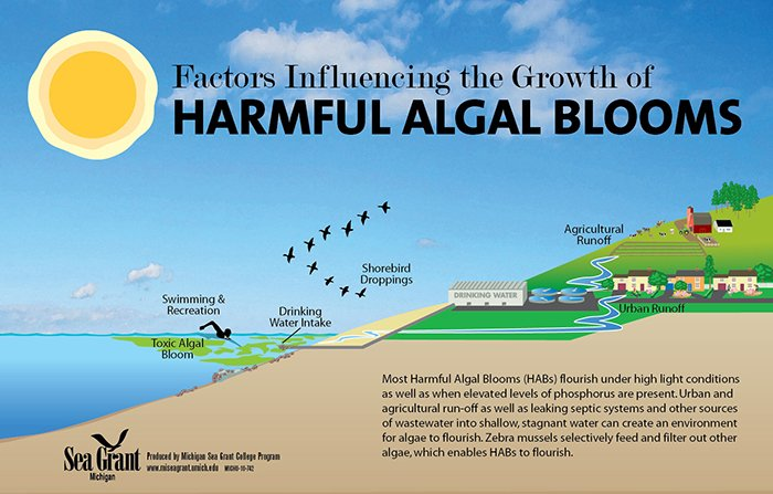 article-Harmful-Algal-Bloom-illustration-700