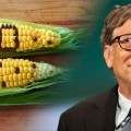 article bill-gates-crops-food-735-350