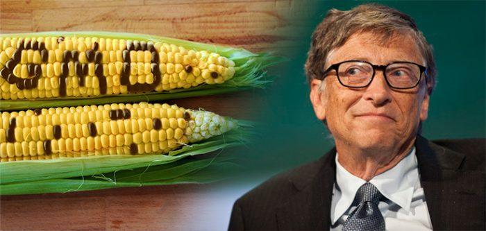 Resultado de imagem para GMO bill gates