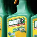 article-roundup-glyphosate-pesticides-735-284