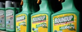 """France Says """"Glyphosate Could Be Carcinogenic to Humans"""""""
