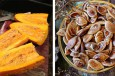 800-Year Old Extinct Squash Grown from Heirloom Seed Resurrected