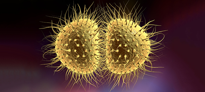 Neisseria gonorrhea bacteria.