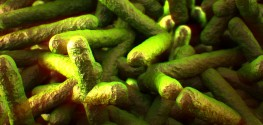 Listeria on the Rise: How to Fight Bad Bacteria in Your Food