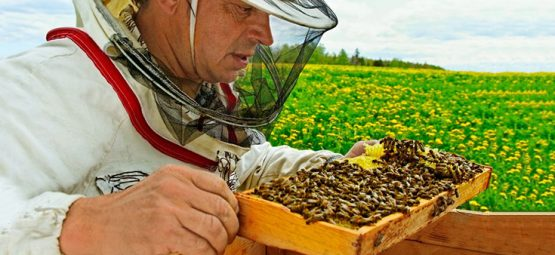 Bees Get Hooked on Pesticides Like People Get Hooked on Cigarettes