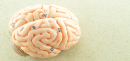 Scientists Claim to Have Created 99% of a Human Brain