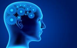 Internal Bacteria May Alter Brain Chemistry