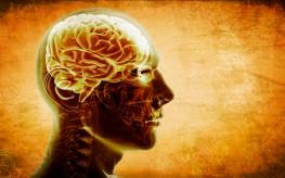 Common Vitamin Deficiency Linked to Brain Shrinkage
