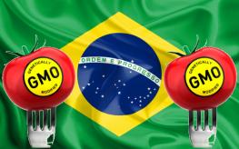 brazil gmo