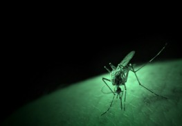 Bill Gates' Foundation Funded Approval of Genetically Modified Mosquitoes